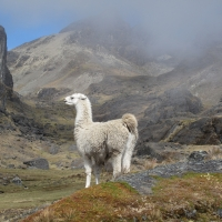Bolivia -- Bolivian Altiplano