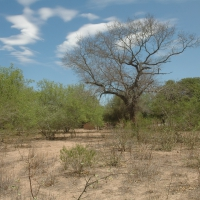 Paraguay -- Dry_Chaco