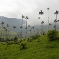 Colombia -- Valle-Cocora