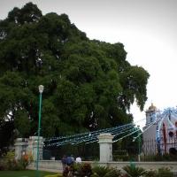 Mexico (Santa Maria del Tule)