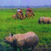 Elephant ride KNP