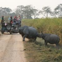 Rhino in Kaziranga__