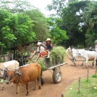 Local Cambodian
