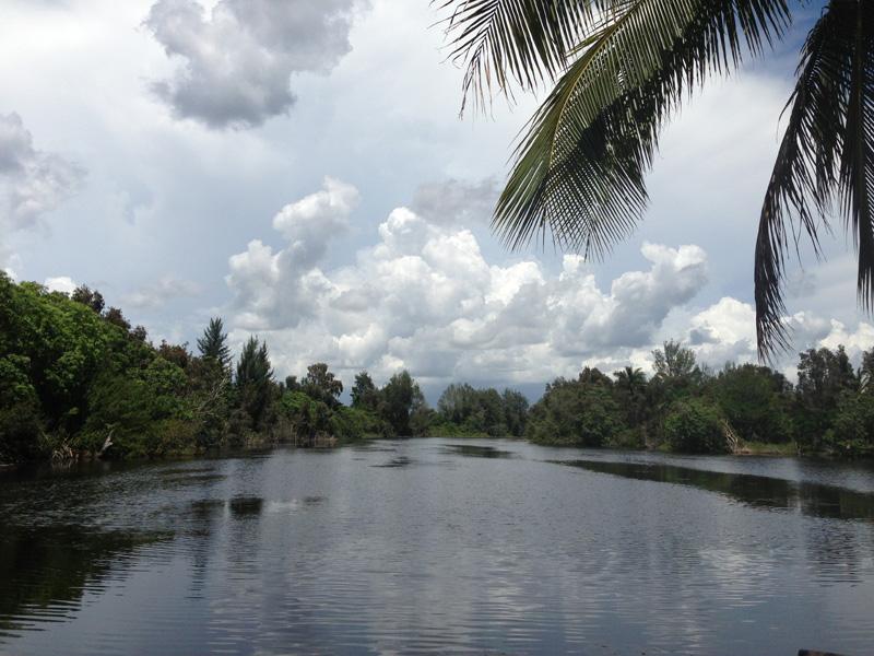 Brazil (Guama-Wetlands)
