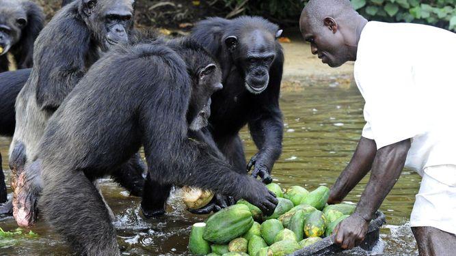Liberia -- Monkey Island