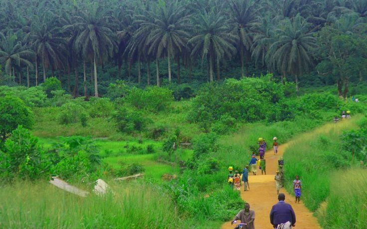 Sierra Leone -- Kambui Hills