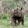 Southern Africa Sweep: Malawi, Zambia, Zimbabwe, Botswana, Namibia, South Africa, Lesotho, Swaziland and Mozambique